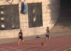 Cane corre e vince la gara