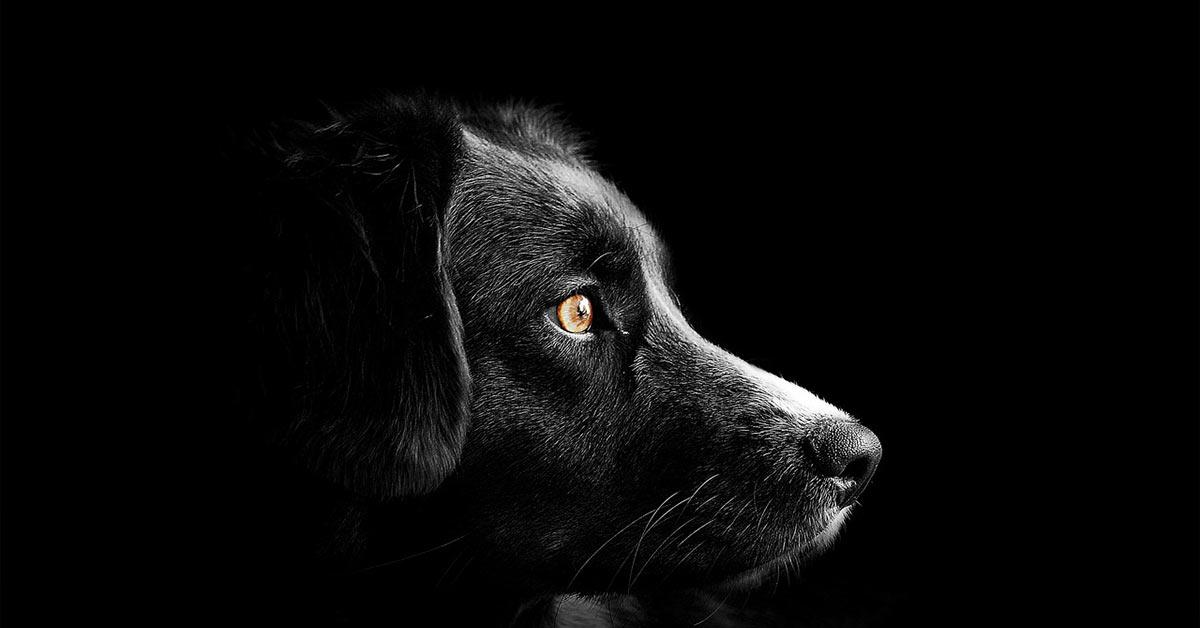 Cane discriminato perché è nero