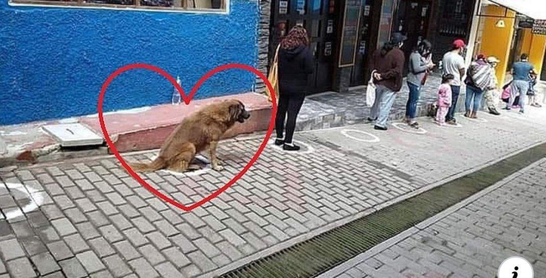 La lezione del cane esemplare