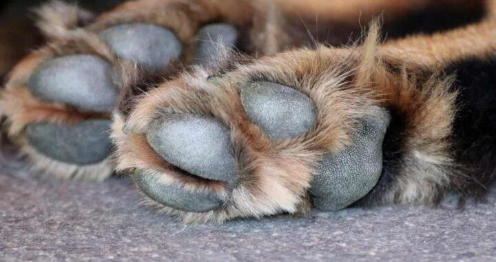 Catania, getta il cane del compagno dalla finestra durante una lite: morto sul colpo