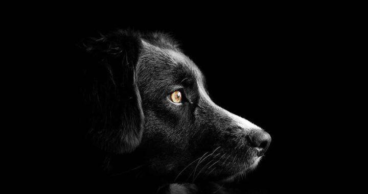 Cane in un angolo triste e solo