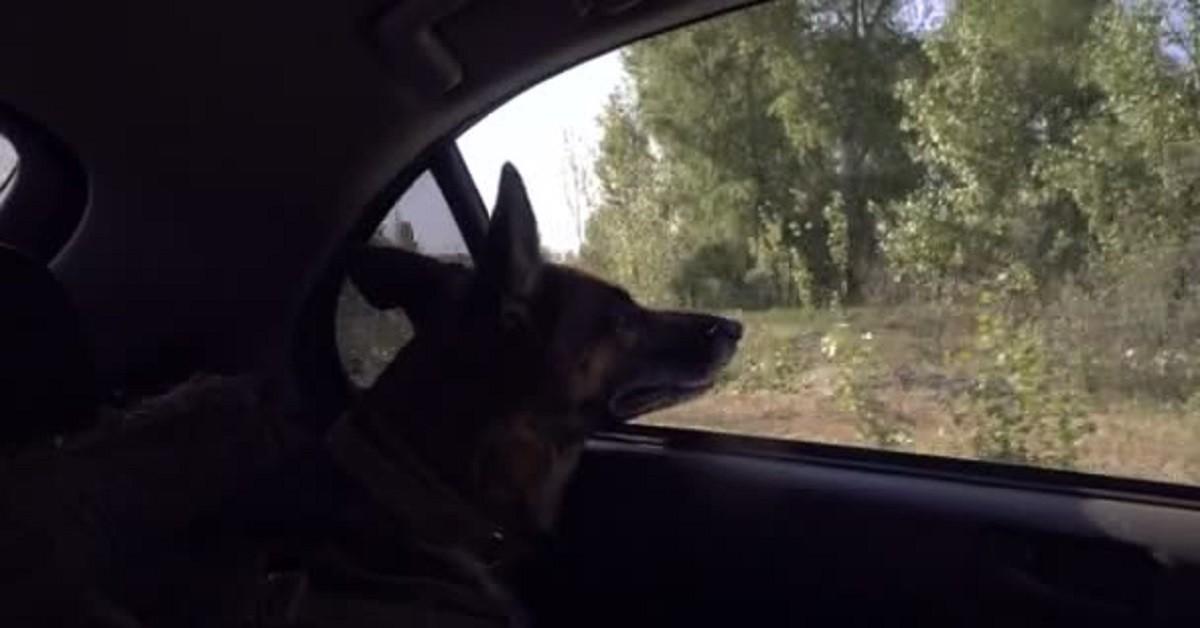 Sassuolo morto cane lasciato chiuso in macchina