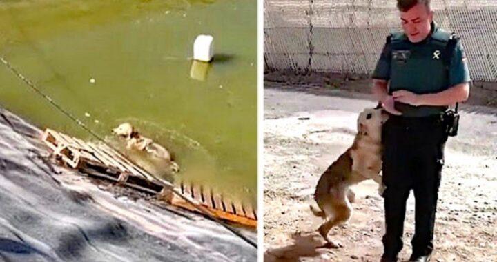 cane salvato dalla Guardia Civile