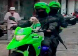 Cane salvato dalla polizia