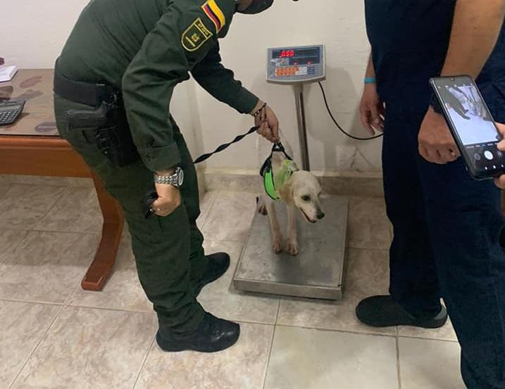 Cane  nella stazione di polizia