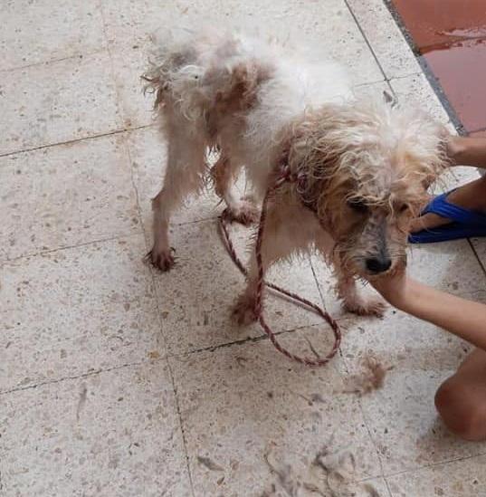 Kiara cagnolina abbandonata
