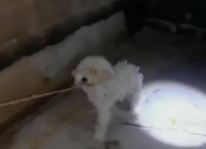 Cane abbandonato salvato