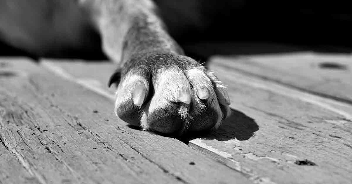 Cane salvato dalle macerie