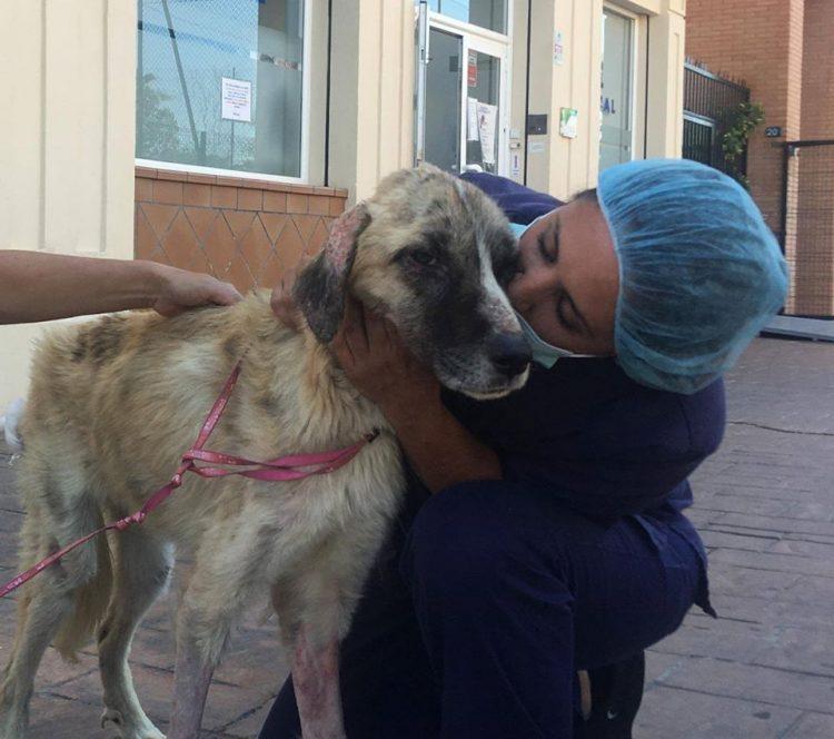 Ulises il cane salvato appena in tempo