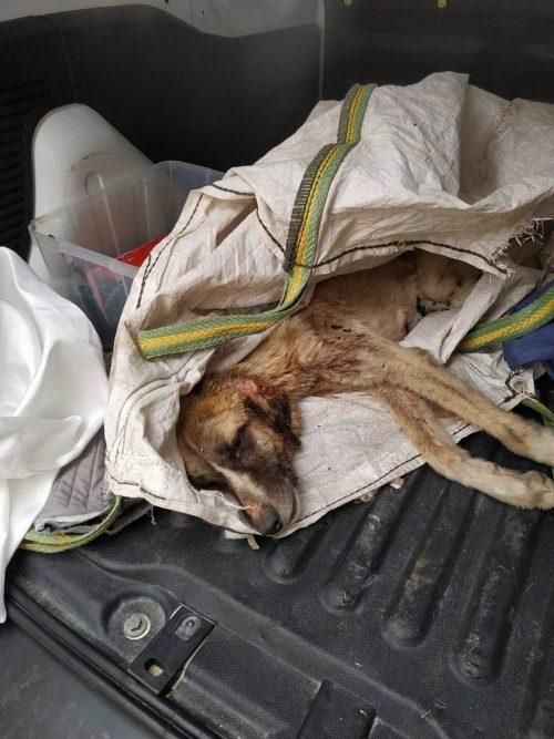 Cane salvato dalle macerie all'ultimo
