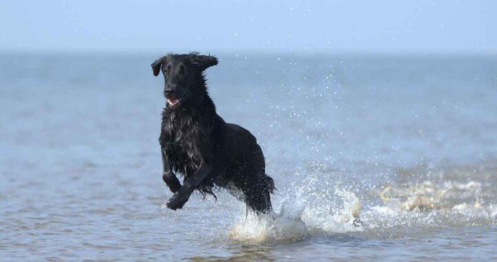 Cane salvato in mare