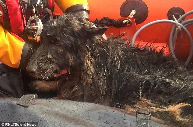 Storm il cane salvato in mare