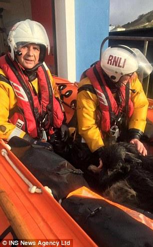 Cane viene salvato in acqua