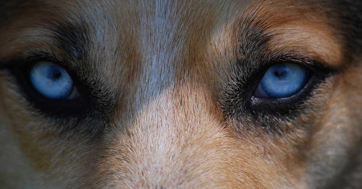 Cane da solo a casa salvato