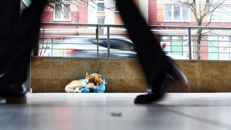 L'husky  legato fuori dal centro commerciale