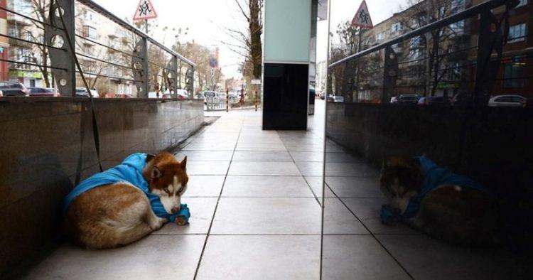 Il cane triste aspetta il proprietario