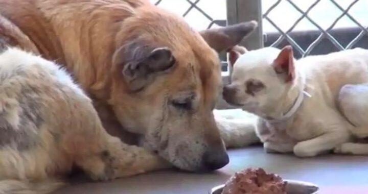 Cani anziani salvati dall'eutanasia all'ultimo minuto