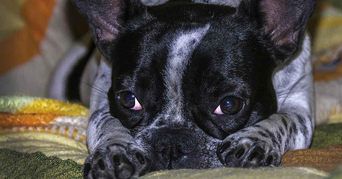 Cani preoccupati prima di dormire