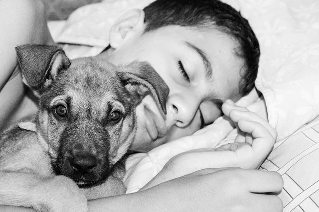 Cane e bambino a letto