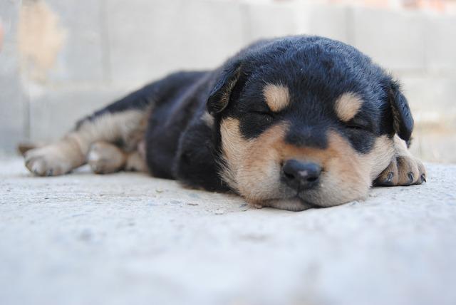 Cucciolo di cane dorme