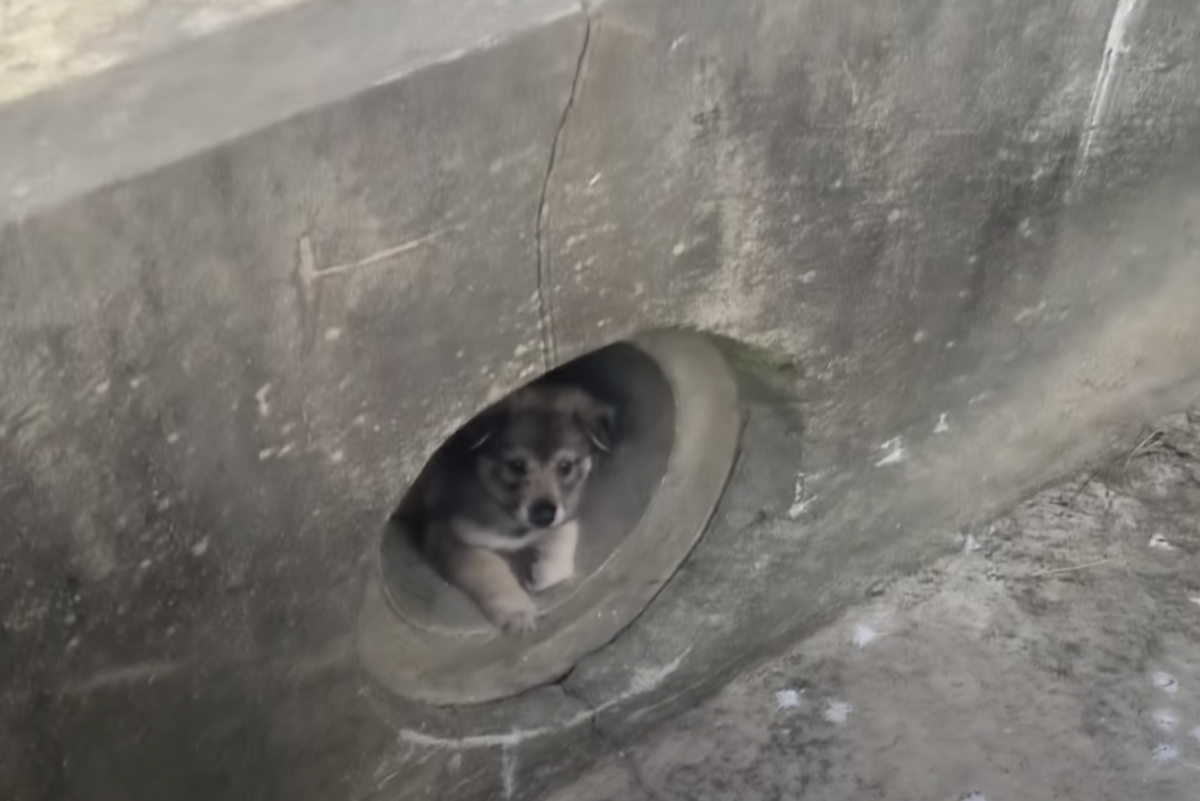 contadino trova 2 cuccioli