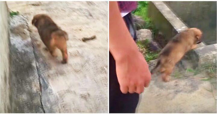 Contadino scopre due cuccioli abbandonati e li aiuta a trovare una nuova famiglia