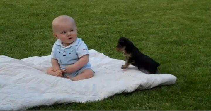 Cucciolo di Yorkshire e neonato