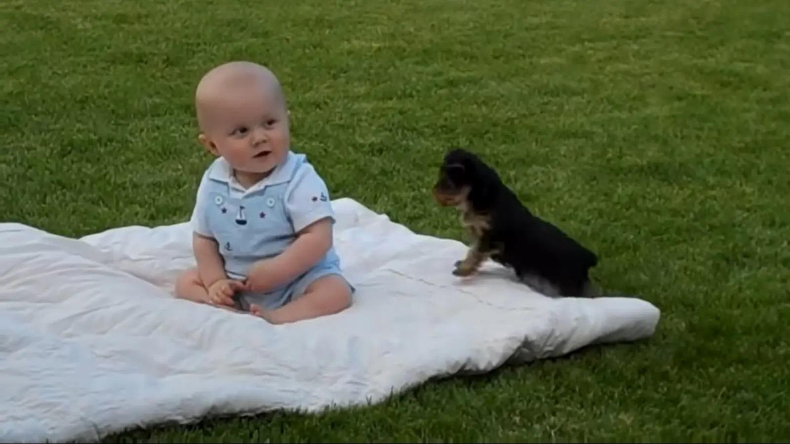 Il cane alle prese con il neonato