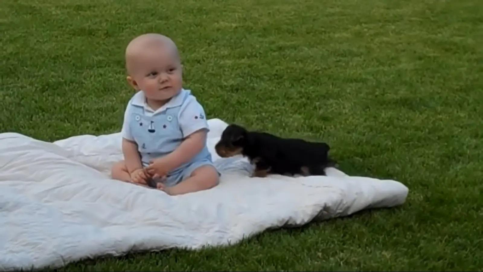 Lo yorkie con il neonato