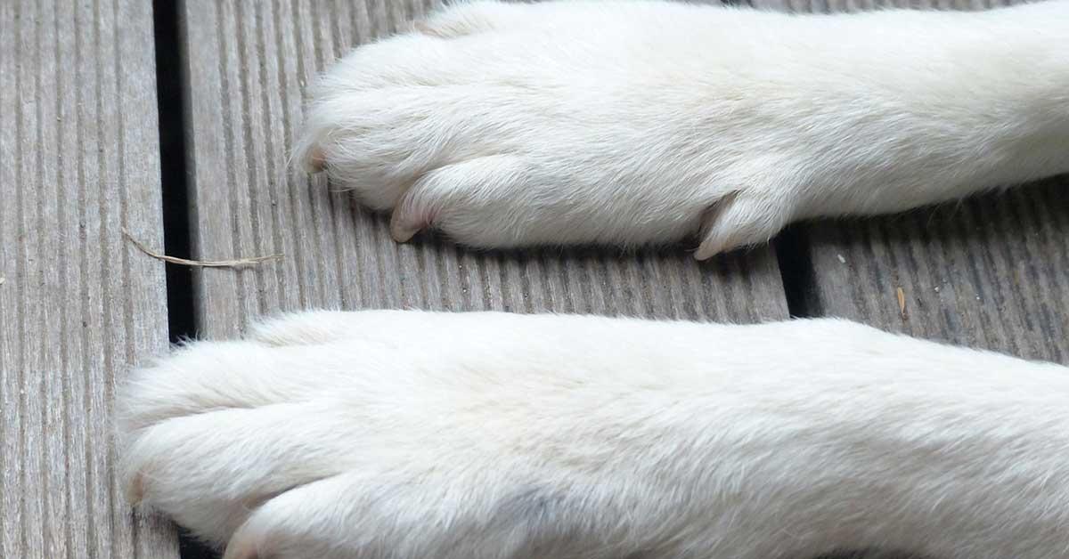 Cucciolo disabile salvato dalla strada