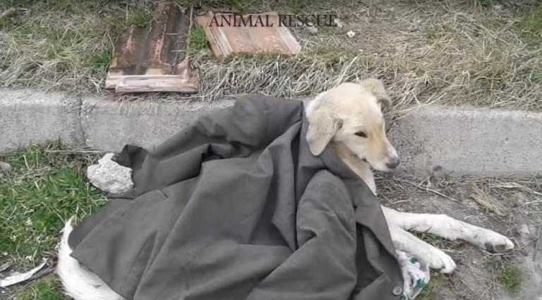 Cane disabile salvato dal marciapiede
