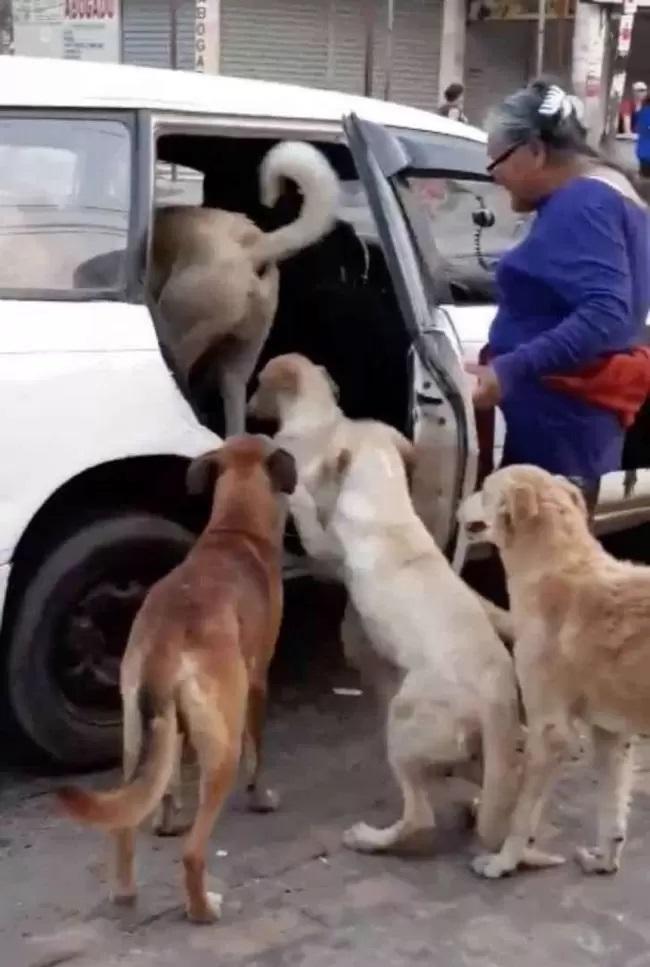 Donna adotta 8 cani randagi di strada