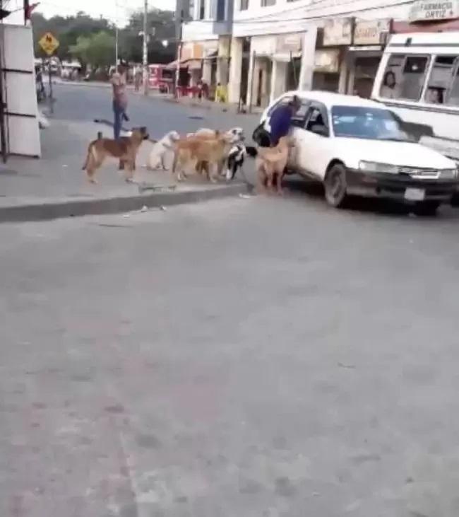 Taxi ospita i cani di strada