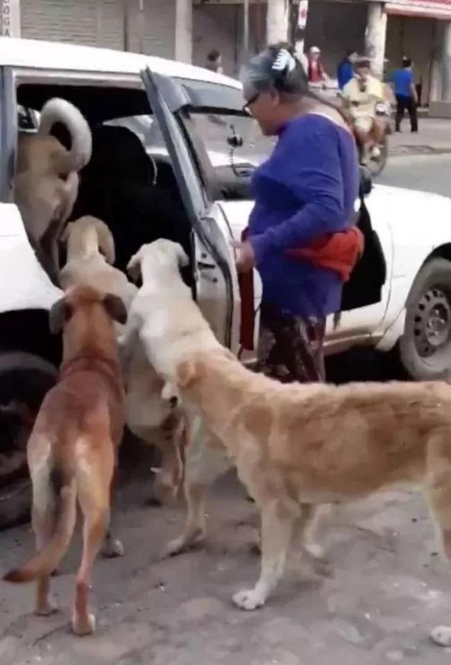 Cani in attesa di salire sul taxi