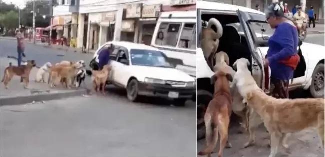 Adozione di 8 cani di strada