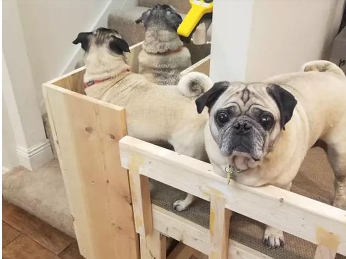 I cani salgono le scale
