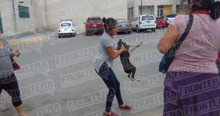 Donna investe il cane che la morde facendo finta di essere svenuto