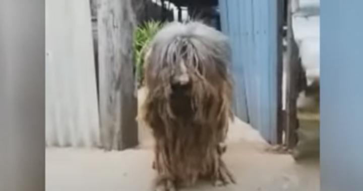 Traslocano e lasciano il cane nella vecchia casa: lui li ha aspettati per tutto il tempo