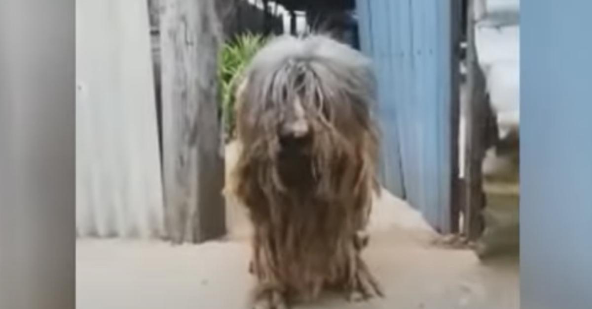 famiglia trasloca lasciano cane casa