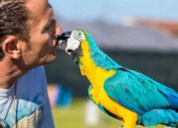 Fly il pappagallo di Enzo Salvi