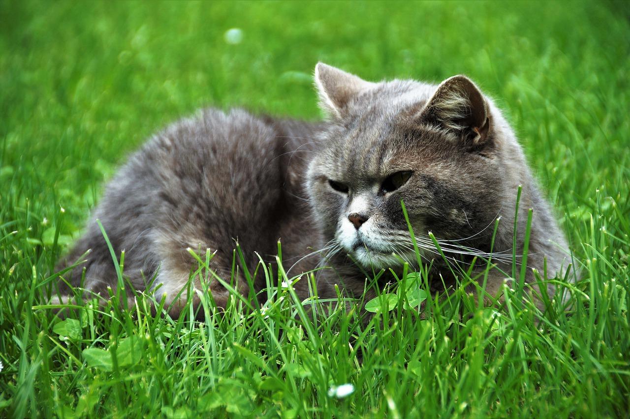 Il gatto obeso