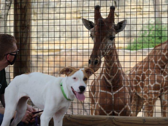Il cucciolo e la giraffa