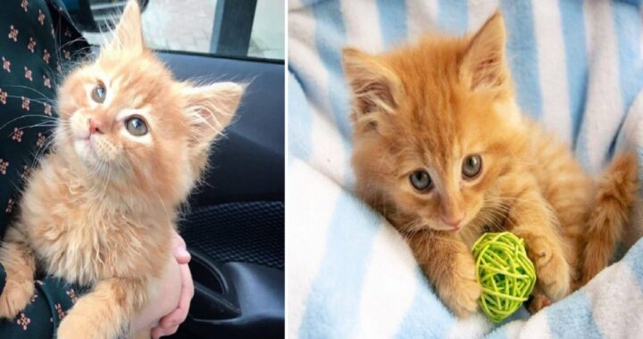 Gattino salvato dalla strada
