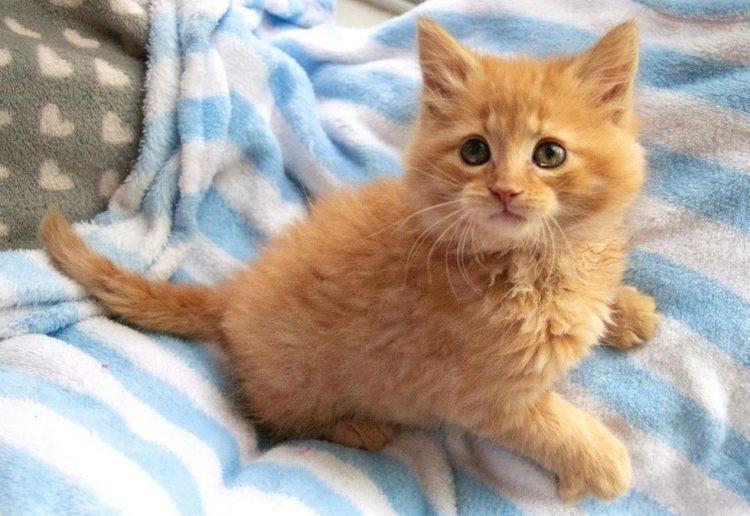 Il gattino salvato è stato adottato