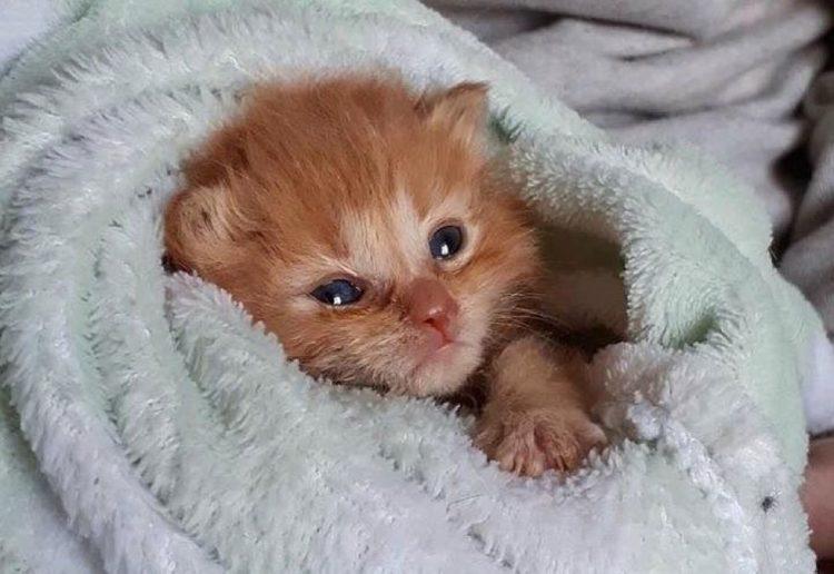 Gattino di una cucciolata salvato