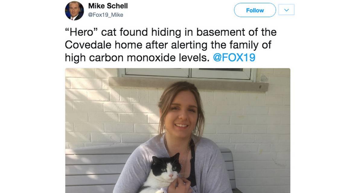 gatto Boo salva famiglia