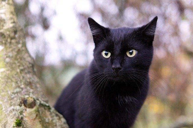 Gattino nero abbandonato