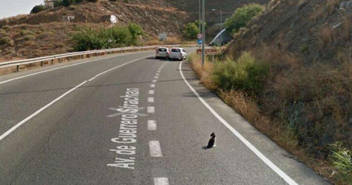 Gatto incastrato sulla strada, uomo fa di tutto per salvarlo