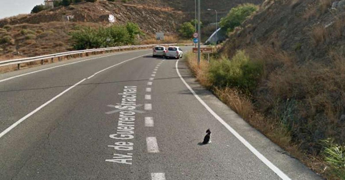 Gatto incastrato in mezzo alla strada
