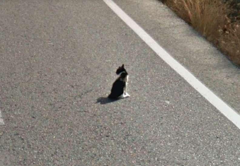 Il gatto rischia la vita
